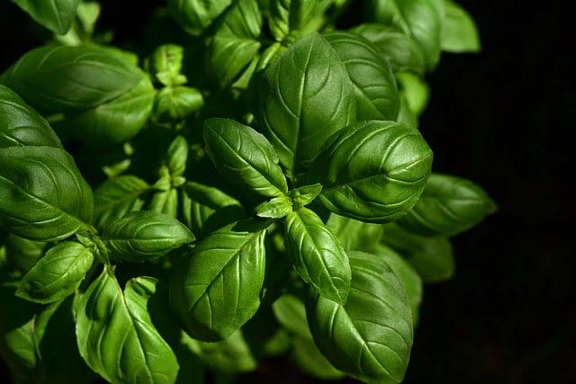 Erbe aromatiche biologiche