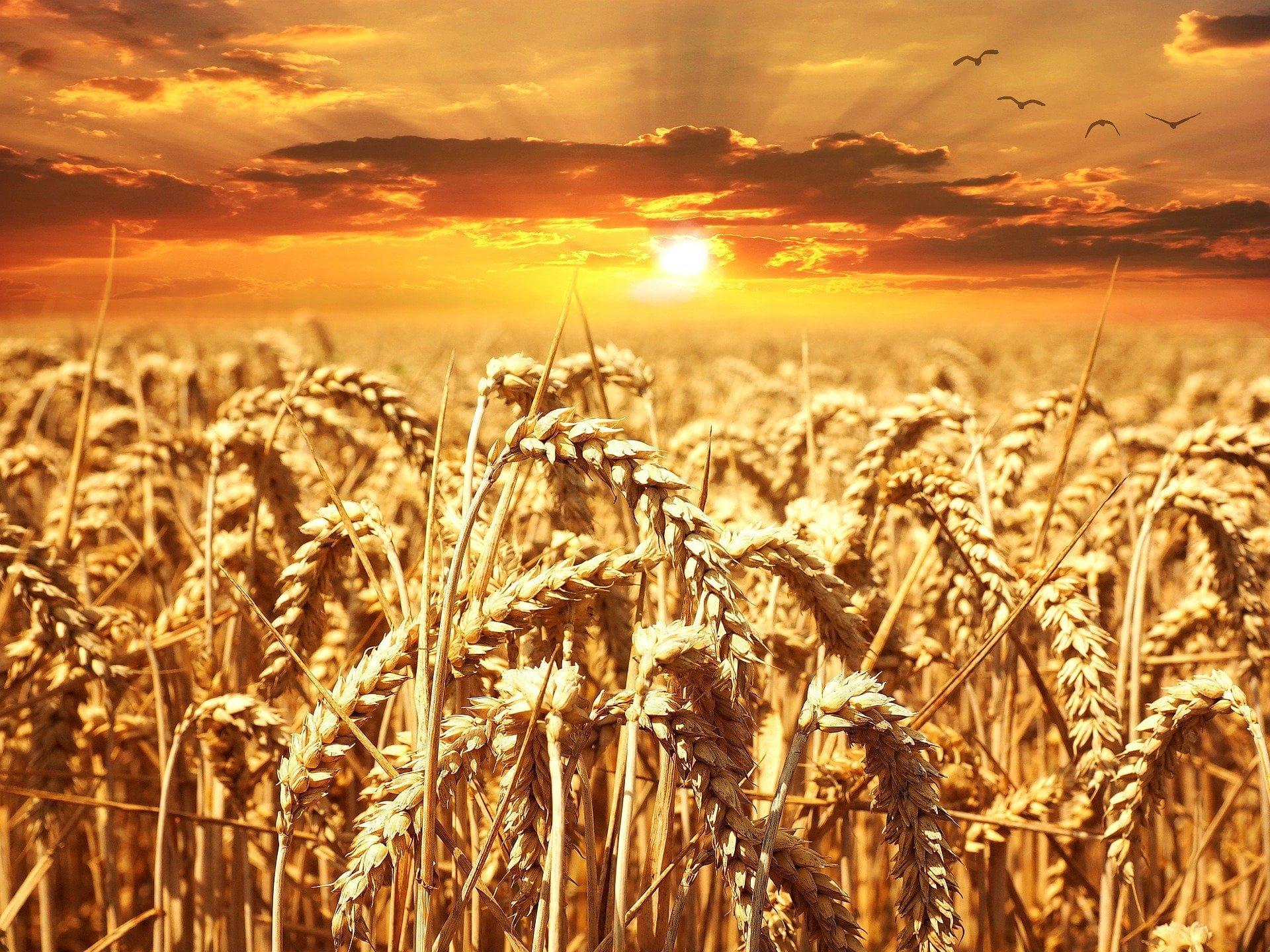 Cereali bio